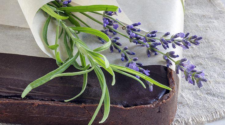 La Ricetta del Liquore alla Lavanda: una veloce ricetta per realizzare in casa un ottimo e gustoso digestivo a base di fiori di lavanda selvatica e limone