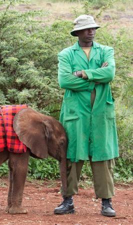 Photo of orphaned calf with keeper at David Sheldrick Wildlife Trust, Nairobi. Please help save the elephants.