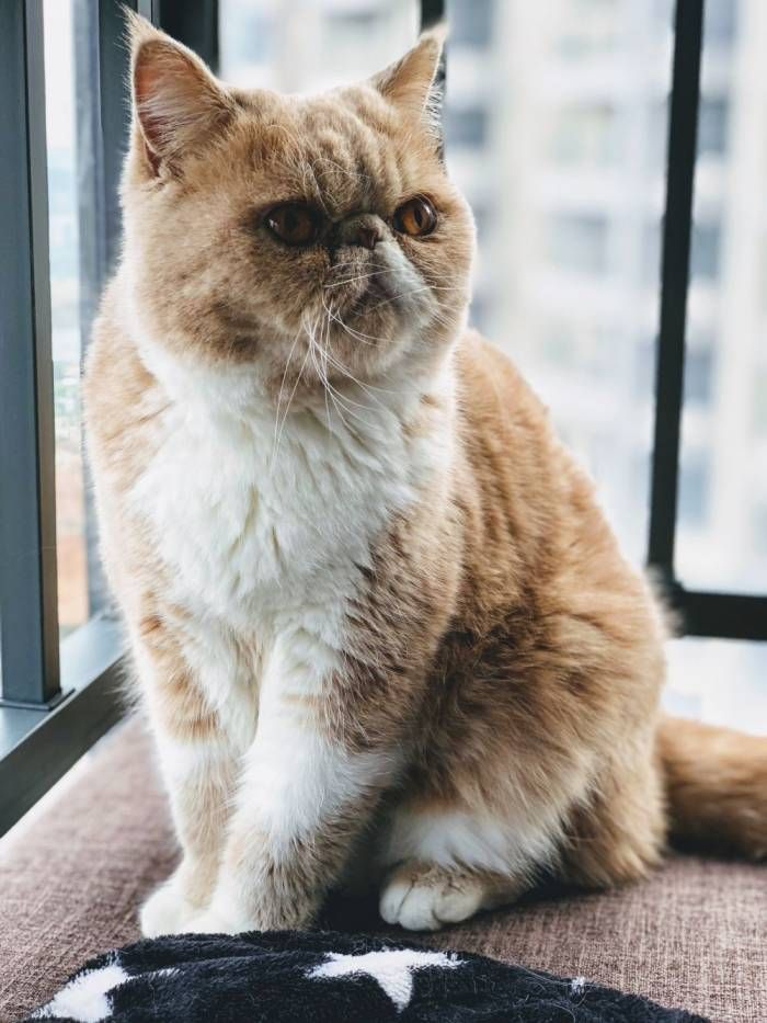 Why We Should Stop Buying And Wearing Fur Clothes In 2020 All Cat Breeds Orange Persian Cat Cat Day