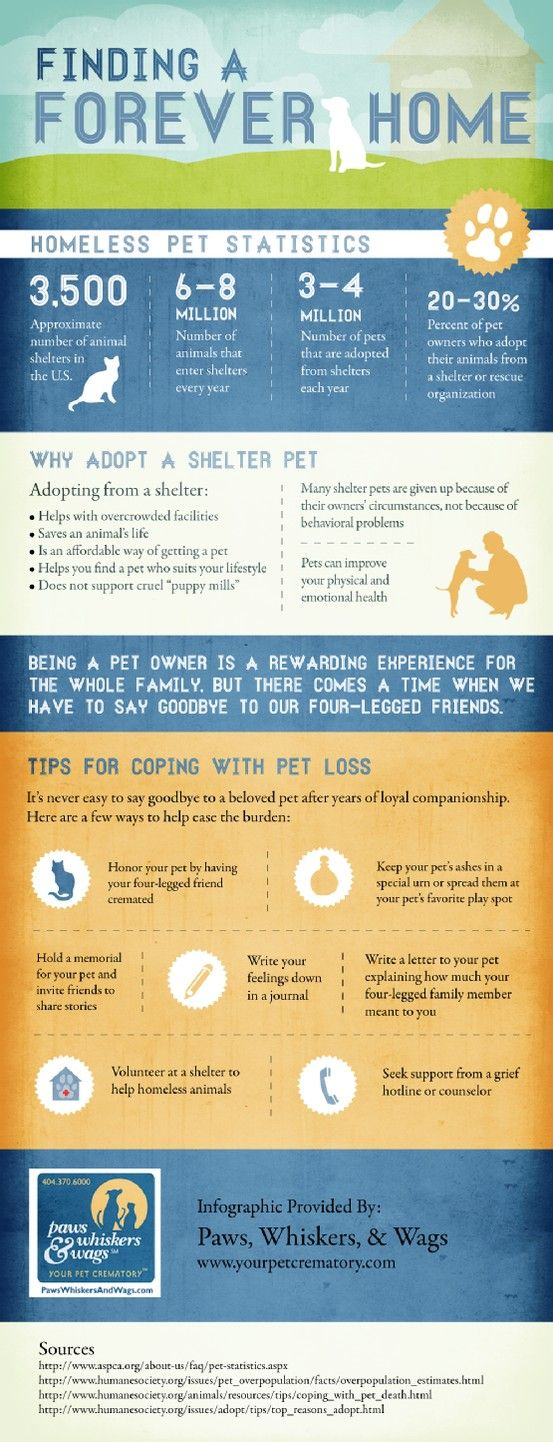 Adopting a pet from a shelter doesn't just help the animal—it also