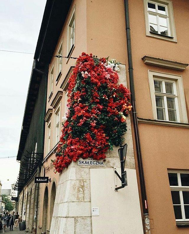 foto: @karinsunny #vzcokrakow #vscokrakow #yourvzcokrakow #krakow #krakowie #cracow #kraków #cracovia #cracov #krakov #краков #krakau #polen #staremiasto #kazimierz #krk  #malopolska #malopolskatogo #rynek #rynekglowny #polski #polskie #polska #architecture #architektura #vscoarchitecture #kwiaty #flower #vscoflowers  #vscoflower