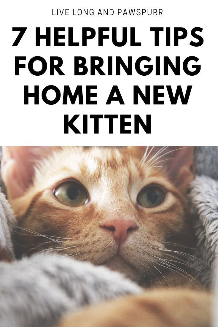 7 Helpful Tips For Introducing A New Kitten To Your Home In 2020 Cat Training Cat Training Tricks Cat Questions