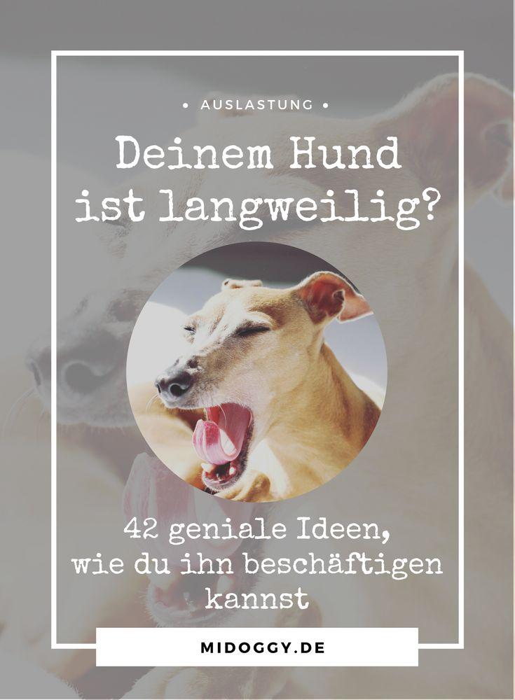 Hunde || Beschäftigung || Ideen || Tiere || Tipps || Tricks || Auslastung || Beschäftigungsideen
