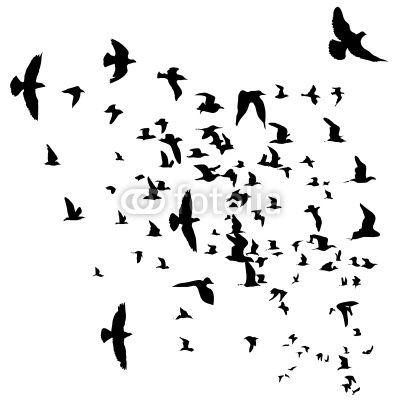 flying birds - חיפוש ב-Google