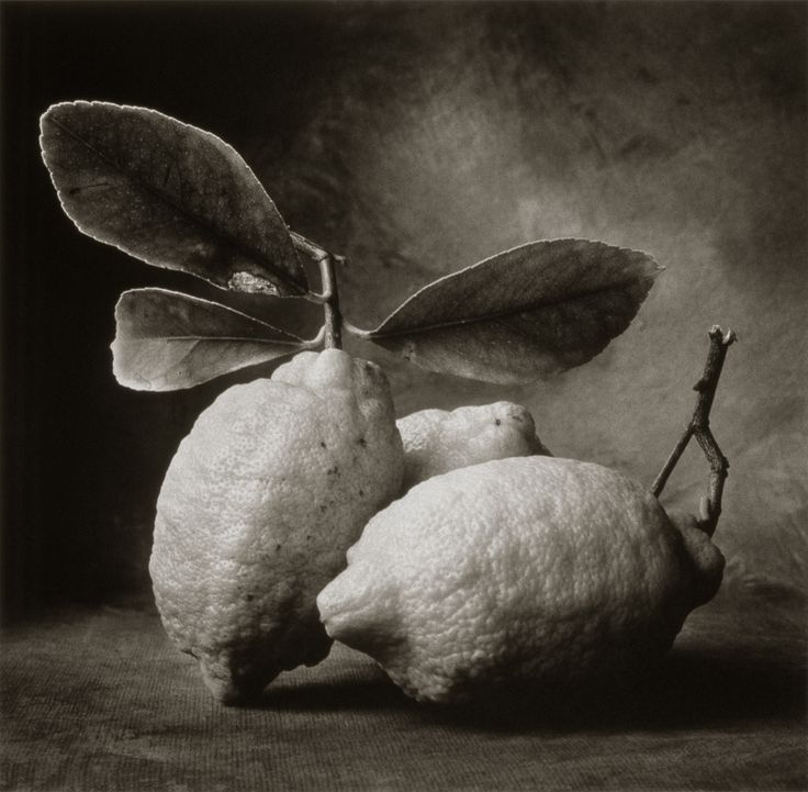 Tuscan Lemons ©Cy DeCosse Fine Art Photography. The Beauty of Food Collection. Limited edition platinum-palladium print. CyDeCosse.com #photography #art #food