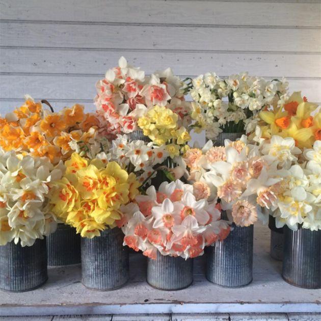 Floret Daffodil Wedding Flowers | Brides.com