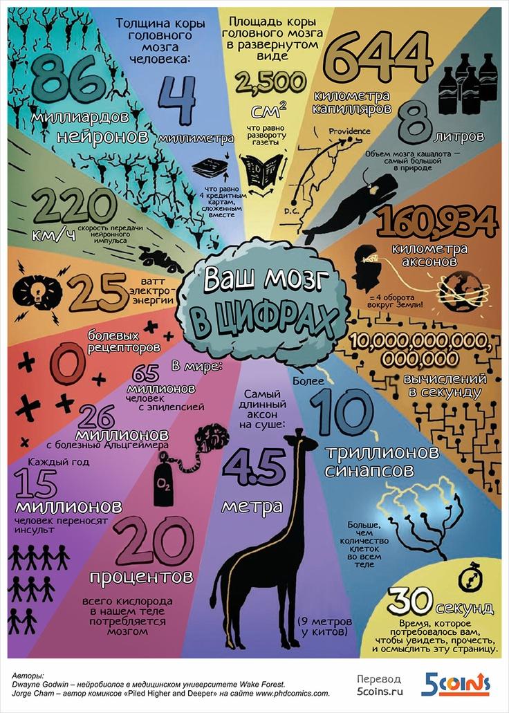 Догадываетесь ли вы о том, что ваш мозг способен производить 10 000 000 000 000 000 вычислений в секунду? Познавательная инфографика о сложнейшем в мире компьютере — человеческом мозге.#инфографика