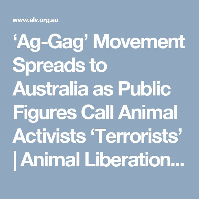 Animal Liberation Victoria: 551 Best Greyhounds Running To Death Images On Pinterest