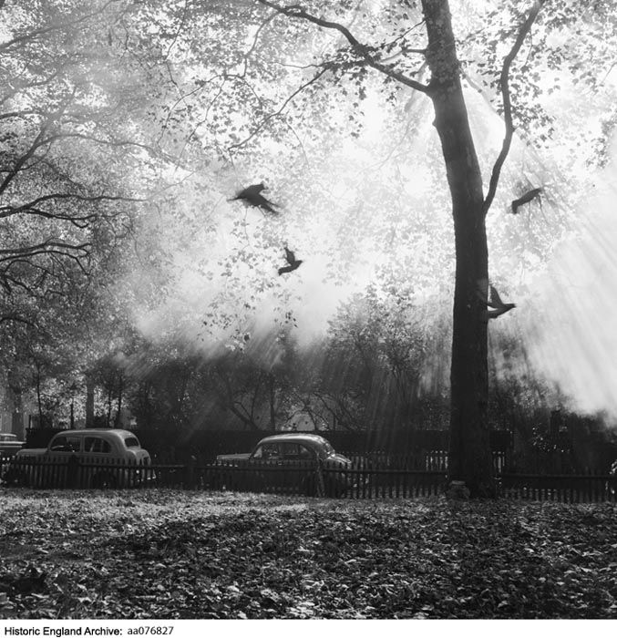 AA076827  Photographer: John Gay TitleBirds flying in front of a tree on Kensington Palace Gardens, London, with rays of sunlight filtering through the branches, and cars parked on the street beyond.    Date1946 - 1970