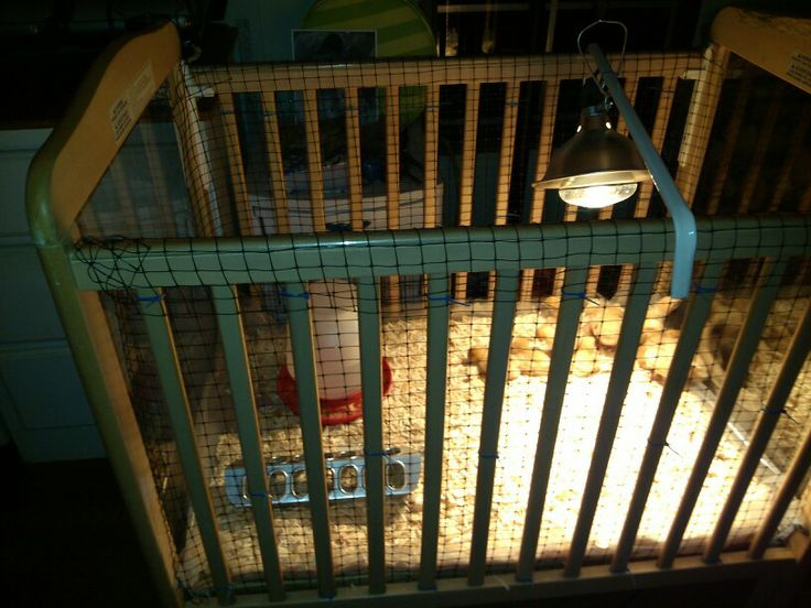 21 Best Images About Baby Chicken Coop Ideas On Pinterest