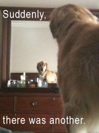 hahahah: Cat, New Houses, Mirror Mirror, Dogs, Too Funny, So Funny, True Stories, Golden Retriever, Animal