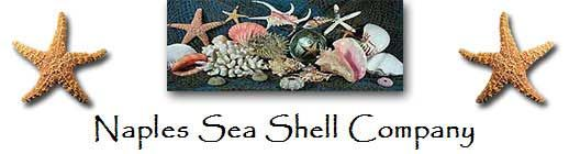 """(link) NaplesSeaShellCompany.com ~ online shopping """"Seashells, Coral, and Sea Life for sale"""" ~ this PIN links directly to page of """"Hermit Crab Seashells - round openings"""". NOTE: Super convenient setup & info to assist Crabbers in buying the """"just right"""" shell sizes! AS STATED: Hermit Crab Shells with Round Openings: Select them by the opening size which is typed in blue. The outside measurement range of each shell is typed in black. ~ for more great PINs w/good links visit @djohnisee ~ have…"""