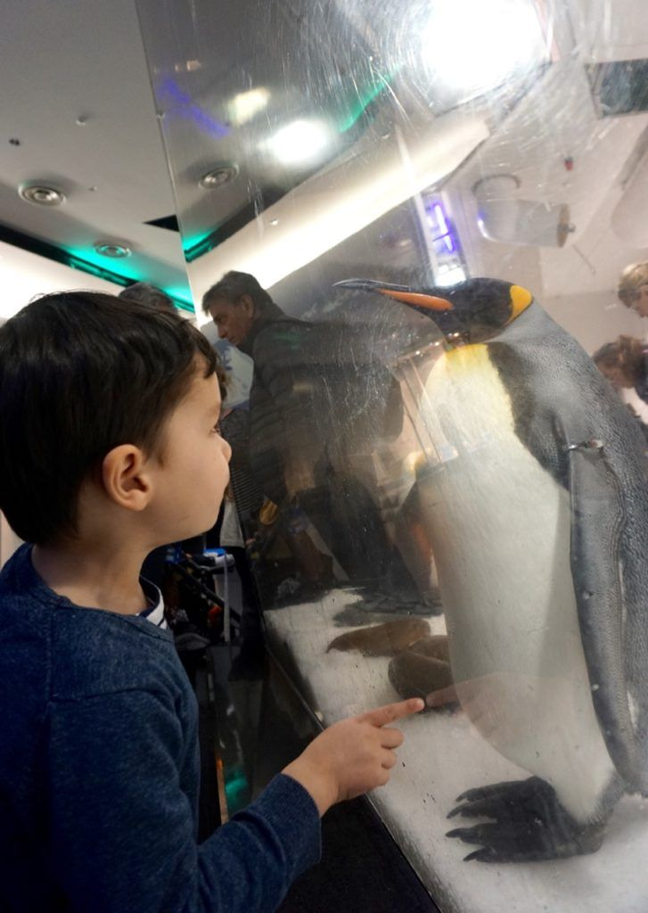 HOT: SEA LIFE Melbourne Aquarium, cnr Flinders St and King St, Melbourne http://tothotornot.com/2015/03/hot-sea-life-melbourne-aquarium-cnr-flinders-st-king-st-melbourne/