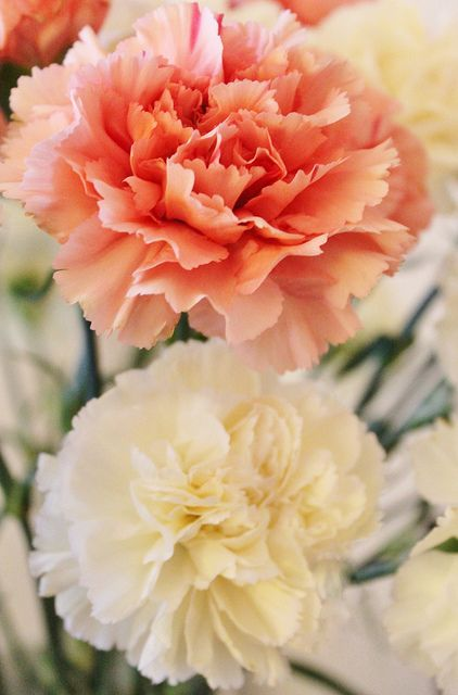 Peach and Cream Carnations. All year round availability