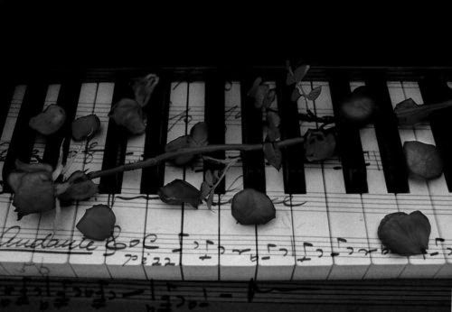 #Piano #Rose #Black and White | Photography | Pinterest ...