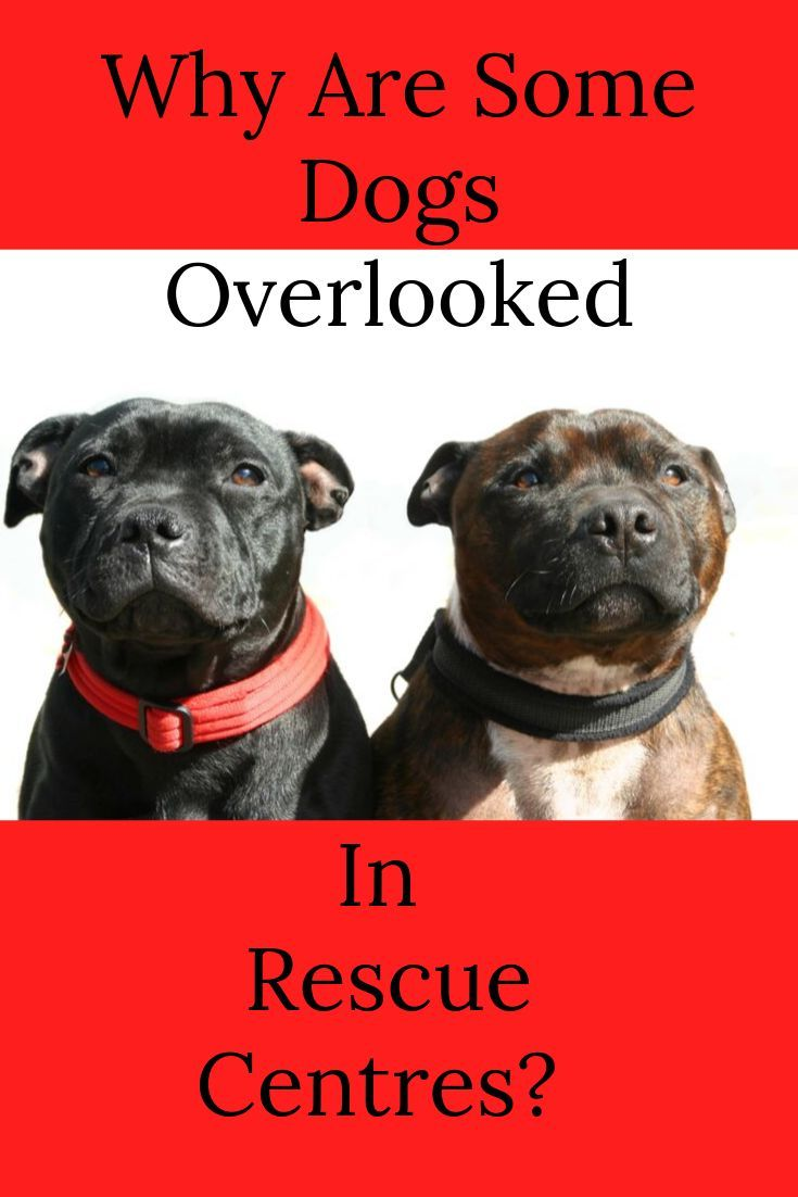Overlooked Dogs In Rescue Dogs Dog Books Rescue Dogs