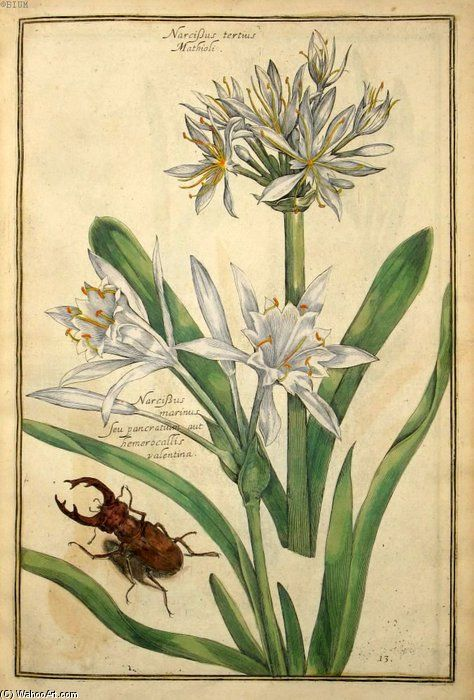 """""""Narcisse Tertius Mathioli"""" de Daniel Rabel (1578-1637, France)"""