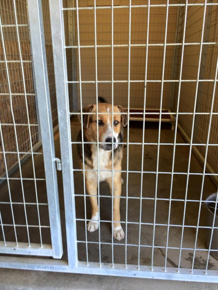 Marshall County Animal Shelter Dogs For Adoption