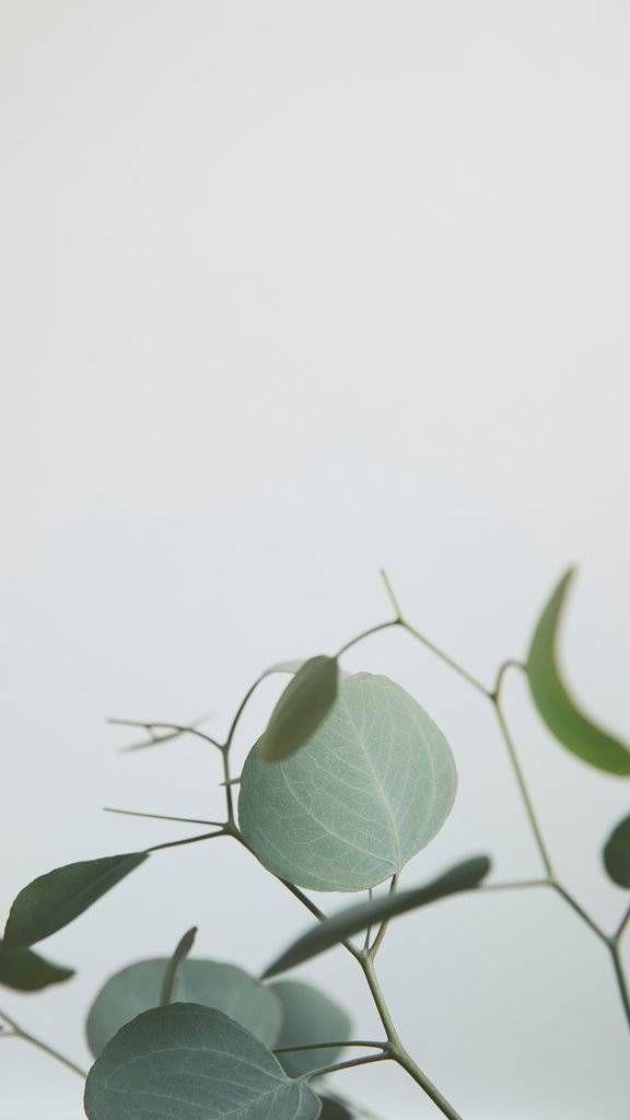 We Love Greenery Wallpapers We Love Greenery Wallpapers Sativa Science Club Can Club Greenery Love S Greenery Wallpaper Plant Background Plant Wallpaper