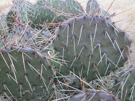 29+ Hardy cactus zone 7 ideas
