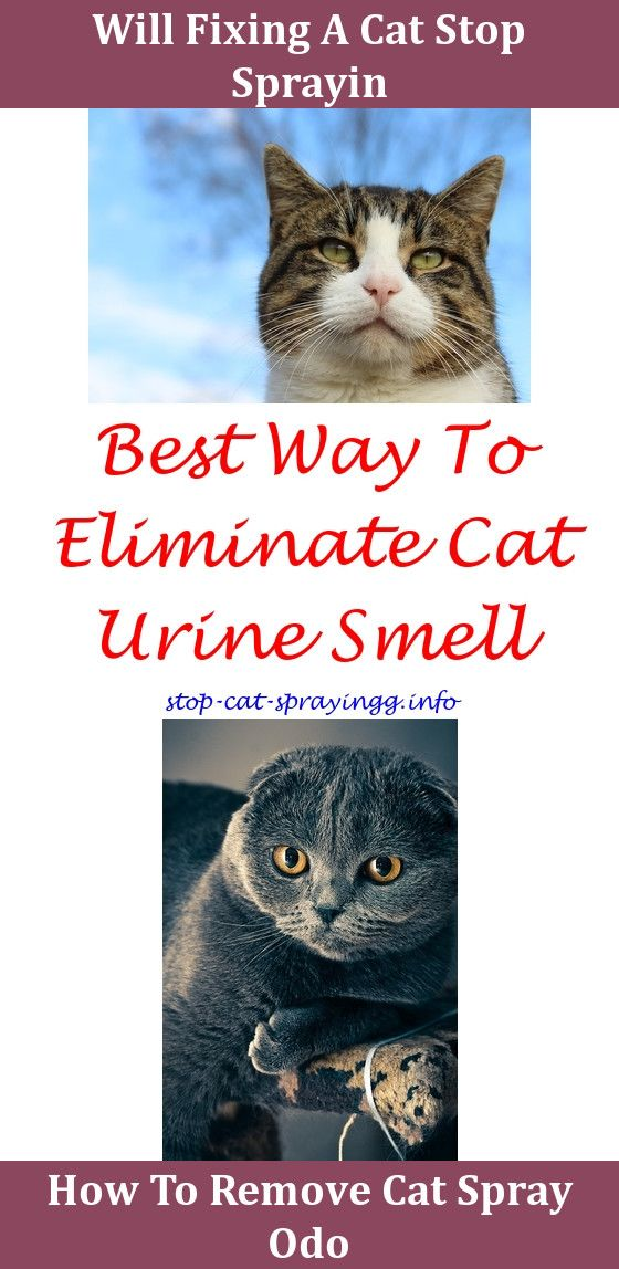 Cat Urine Carpet Cleaner Machine Carpet Alan