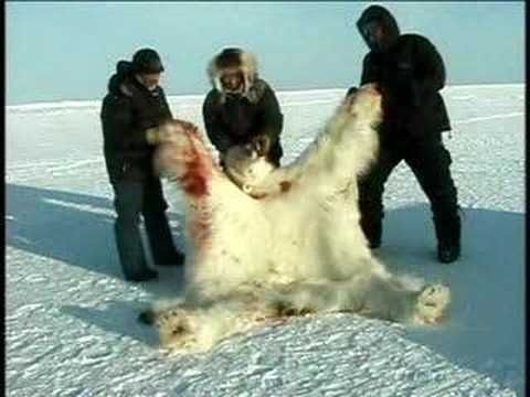 Save the Last 20,000 Polar Bears, sign the petition http://www.causes.com/actions/1717624-save-the-last-20-000-polar-bears?utm_campaign=activity_mailer%2Fcustom_activity_mail_medium=email_source=causes