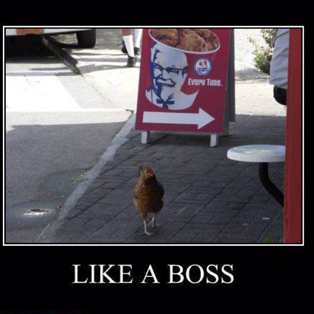 Whose your daddy! Yea I am the Boss! | Funny stuff | Pinterest