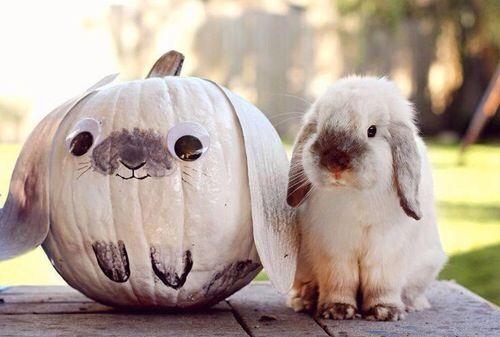 rabbit pumpkin | adorable, animals, autumn, awesome, beautiful, bunny, cute, dream ...