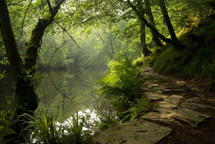 Plym River, Plym Valley, near Plymouth, Dartmoor, Devon