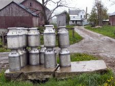 Milk cans waiting to be taken to make cheese.