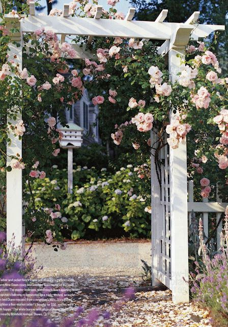 There is nothing better in summer than pink climbing roses on a white trellis.: