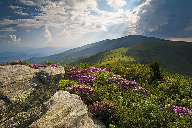 Roan Mountain, Appalachian Trail, Great Smoky Mountains National Park