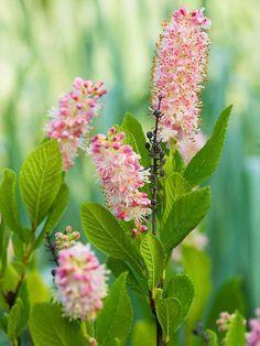 The best flowering shrubs for hedges