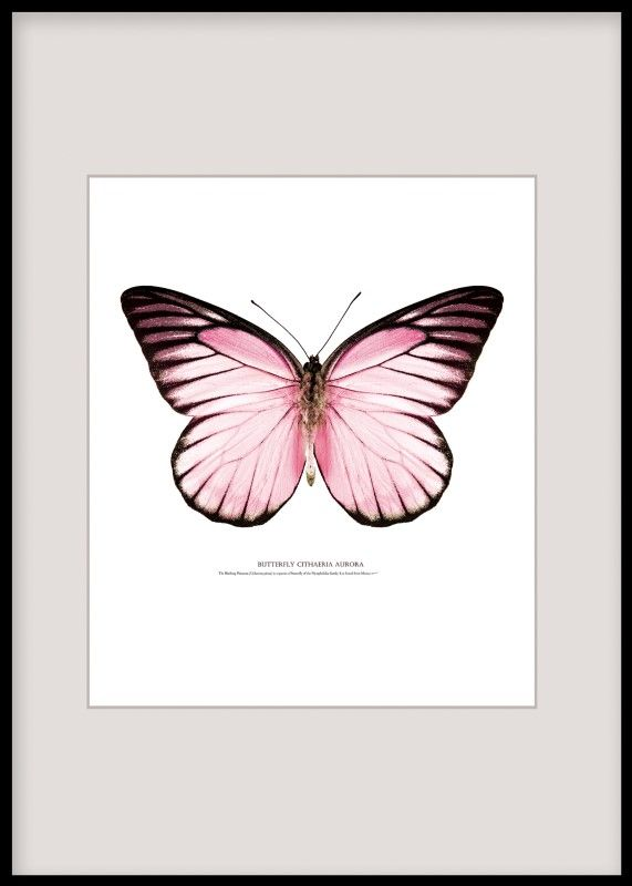 Tavlor med insekter och fjärilar
