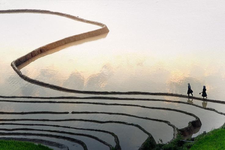 Cloud fieds, Tule, MuCang Chai Dist, YenBai province - Vietnam