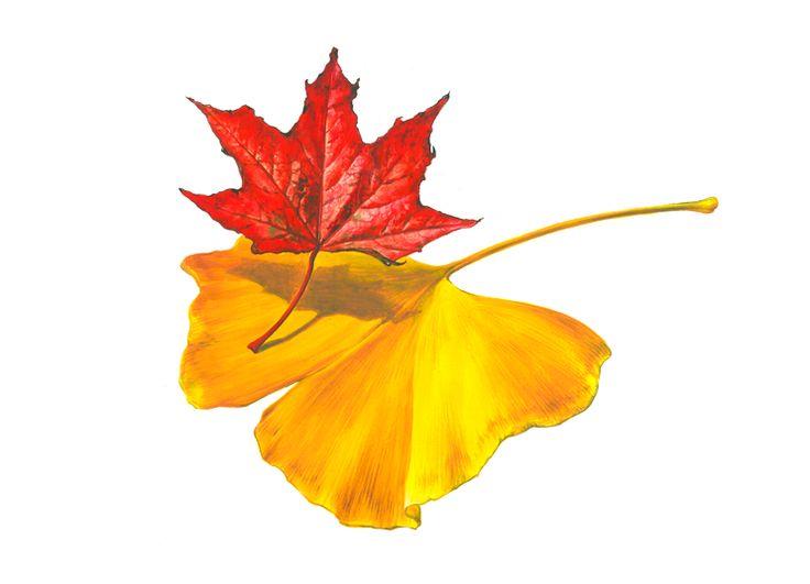나뭇잎(자연물)
