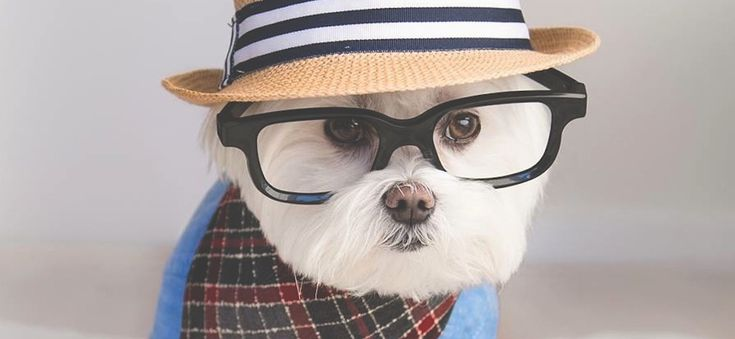 Meet_Toby_LittleDude_The_Charming_Hipster_Dog_Of_Instagram_with_Attitude_2016_header