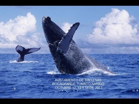 "TUMACO, NARIÑO, COLOMBIA/ TURISMO - ""Avistamiento de Ballenas en Tumaco-Nariño"". 30 AGO 2013."