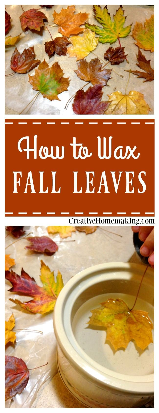 Easy instructions for waxing fall leaves for autumn or Thanksgiving decorations.
