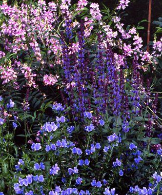 226 Best Images About Perrenial Flower Garden Sun English