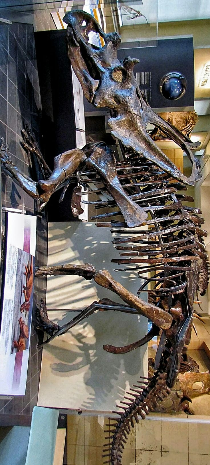 Green tea and velociraptors it s just a flesh wound - Best 25 Genus Meaning Ideas That You Will Like On Pinterest Amuse Meaning Meaning Of Amuse And Spinosaurus