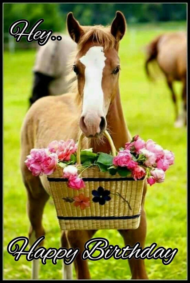 Happy birthday horse