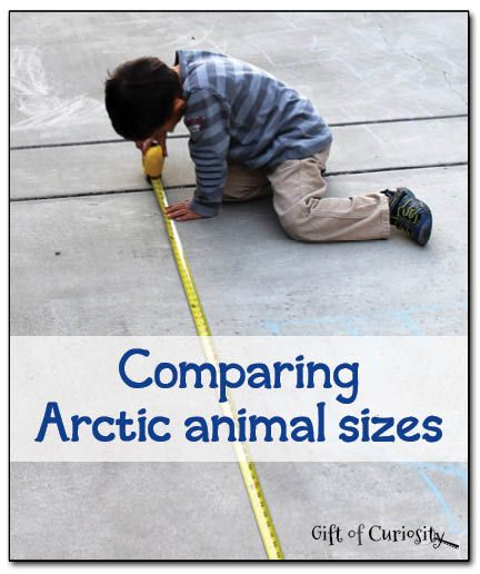 Comparing #Arctic animal sizes - an activity that combines learning about Arctic animals with practicing measuring skills || Gift of Curiosity
