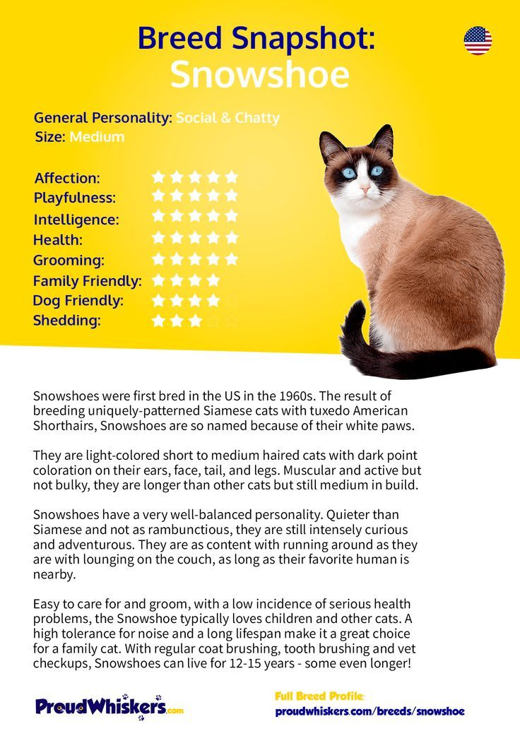 Snowshoe Breed Profile Proudwhiskers Com Snowshoe Cat Cat