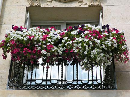 .Windowboxes