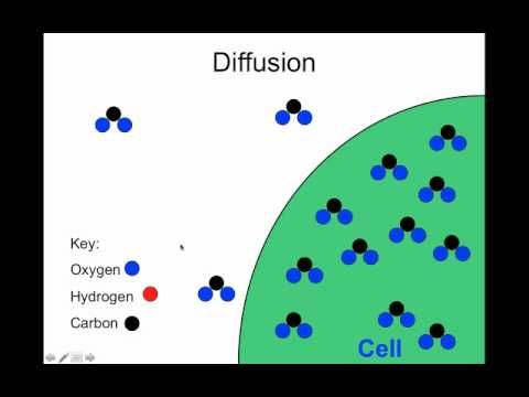 biology diffusion Covers selective permeability of membranes, diffusion, and facilitated  image  credit: openstax biology, modified from original work by mariana ruiz villareal.
