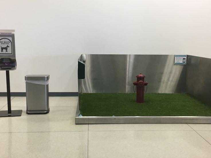 Dog relief airport /Charlotte North Carolina.
