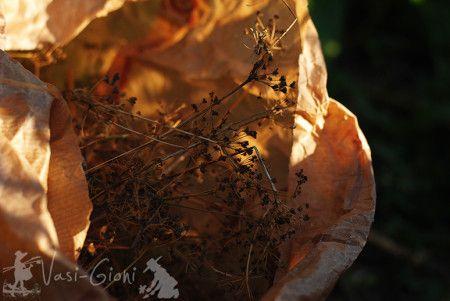 Semințe de țelină