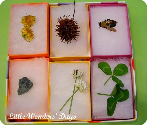 A spring treasure box...Nature Treasure, Spring Walks, Spring Nature, Kids Nature, Nature Walks, Walks Kids, Spring Treasure, Treasure Boxes, Boxes Lov