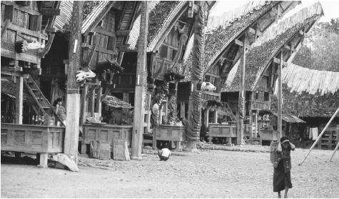 A row of tongkona houses in the Toraja village of Palawa. The buffalo horns tied to the poles supporting the massive gable of these houses are a sign of wealth and reputation.